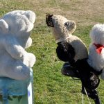 The Joyful Bear