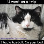 Cat with caption