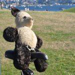 Pandy the teddy bear